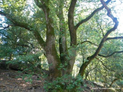 elderberry trail