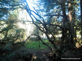 bridle trail