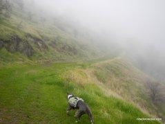 arata overlook trail