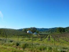vineyard dr