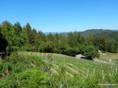 hillside vineayrds