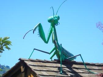 donald dr-grasshopper