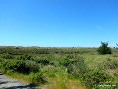 drakes bay marsh-wetland