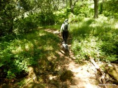coyote trail