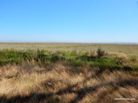 whittell marsh