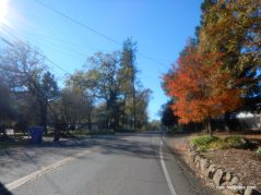 white cottage rd