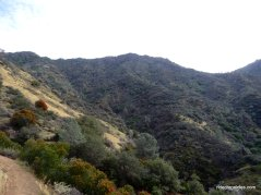 wild oat canyon