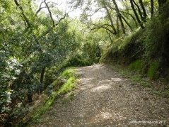 bay leaf trail