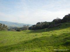 oak tree trail