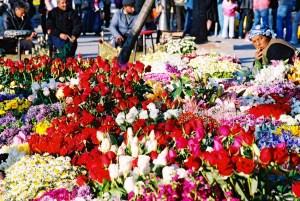 Yuri Martins Fontes / Turquia - 2007 / Istambul: Mercado de flores.