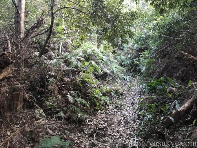 大烏帽子山草の生い茂る平見ルートの