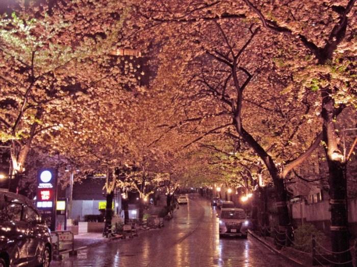 スペイン坂の秋みたいな桜並木2