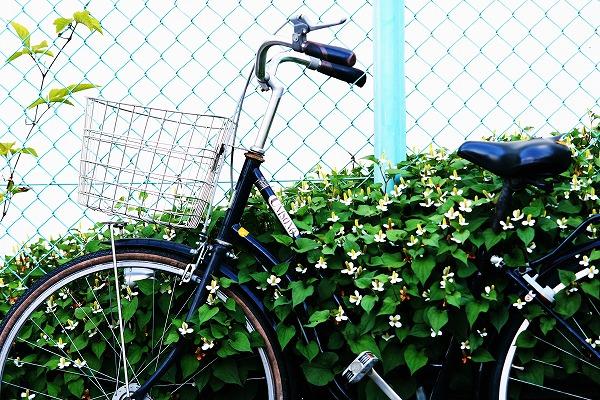 自転車と花