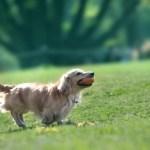 犬のしっぽから感情や気持ちがわかる?しっぽを追いかける理由とは?