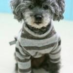 犬が服を嫌がる理由とは?服を噛むなど困った行動の対処法をご紹介!