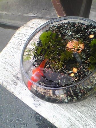 商店街を歩いていたら金魚鉢が