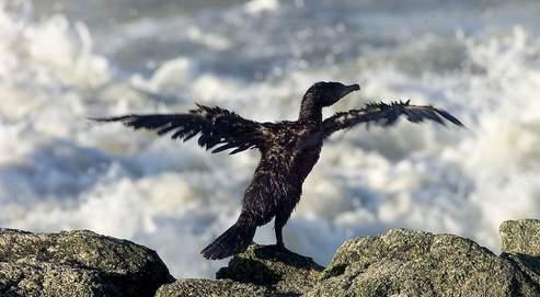 La colombe de la paix à du plomb dans l'aile