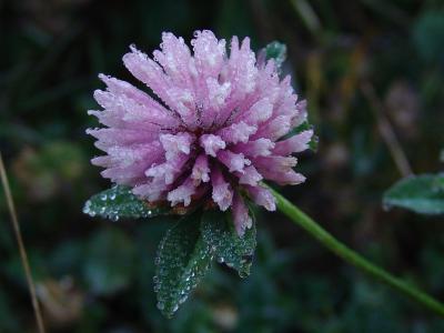Eine Blume mit Tauperlen