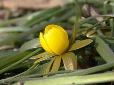 Sogar die erste Blume in 2006 guckt schon raus