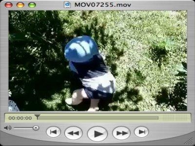 Eine Krümelraupe im Garten unterwegs