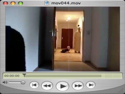 Yves wuzzelt kreuz und quer durch die Wohnung