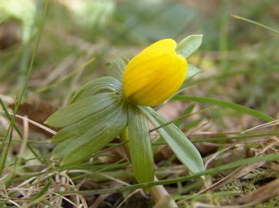 Und diese kleinen Gelben...