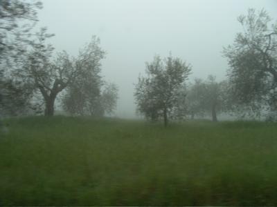 Noch dichterer Nebel heute