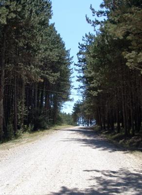 Der Kiesweg führt durch die Allee