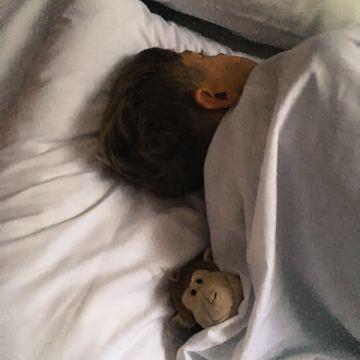Yves dorme ancora ma la scimmia è gia sveglia...