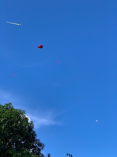 Many kites are flying over our house