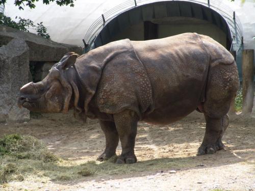 Nashörner & Antilopen
