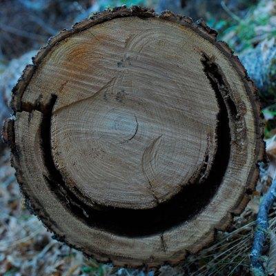 Found Fridays: smiling log