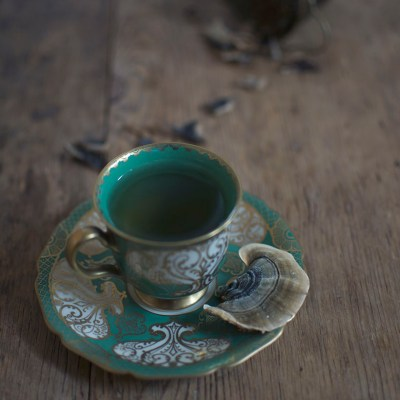 Turkey Tail Tea Time