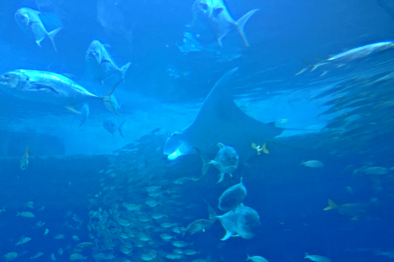 Diverse fisker