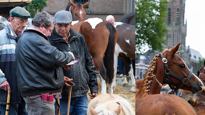 Elster paardenmarkt