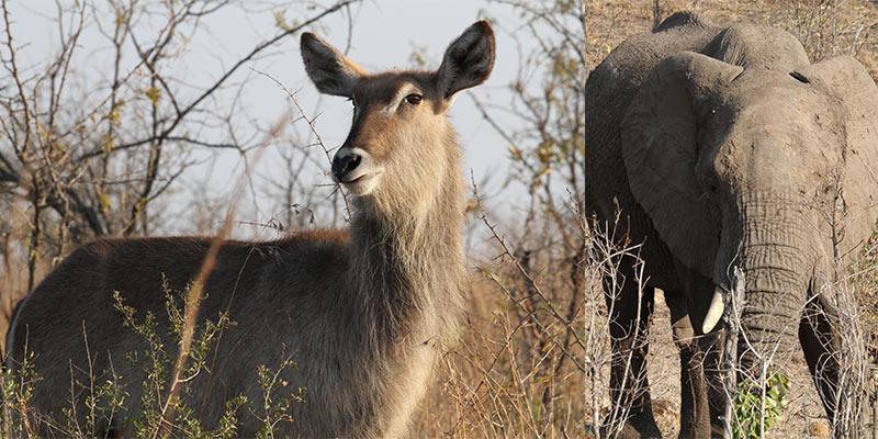 Kruger Park vanuit Numbi Gate
