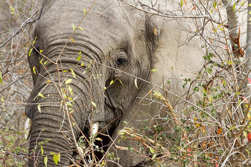 safari fotografie: kom dichterbij