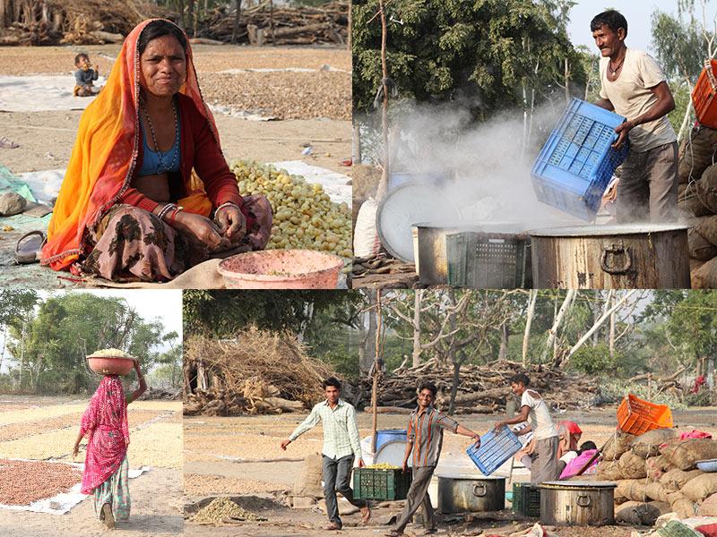 amla plantage India