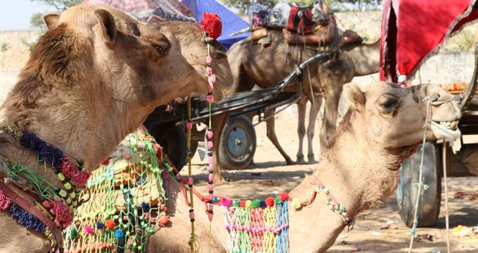 met kids op kamelensafari
