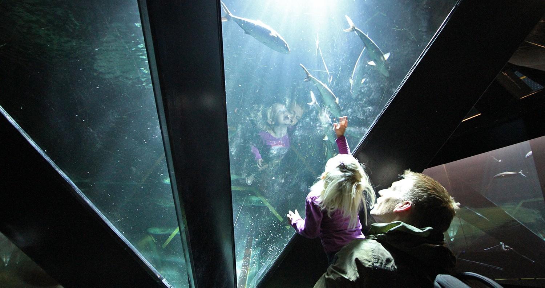Boulogne-sur-mer aquarium