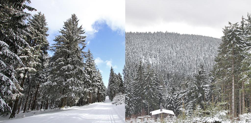 Thüringer Wald winter