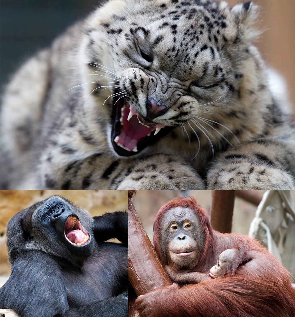 dierentuin Krefeld Ruhrgebied