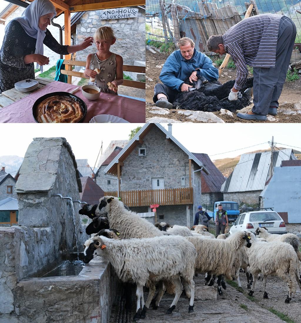onze accommodatie en de schapen in Lukomir