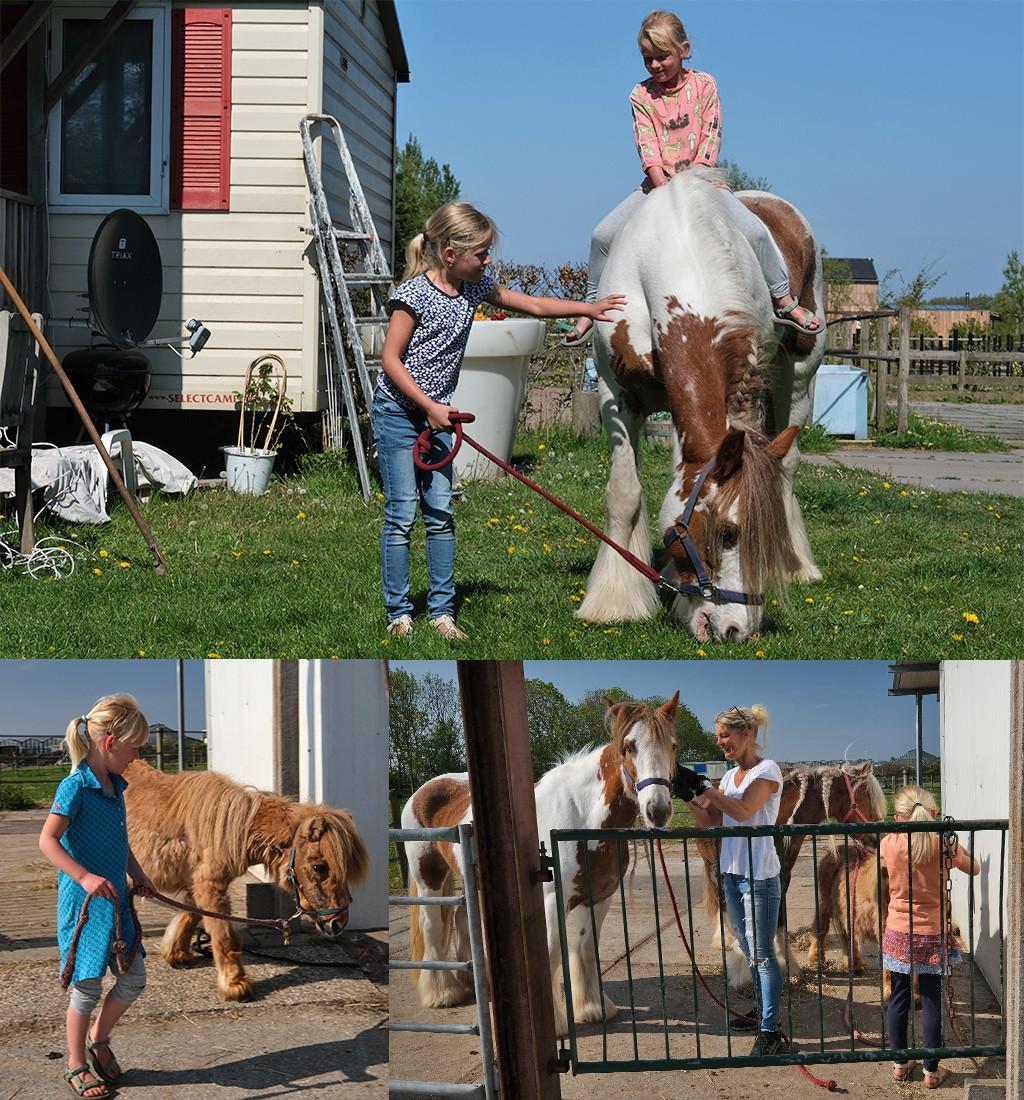 paarden verzorgen bij de boer