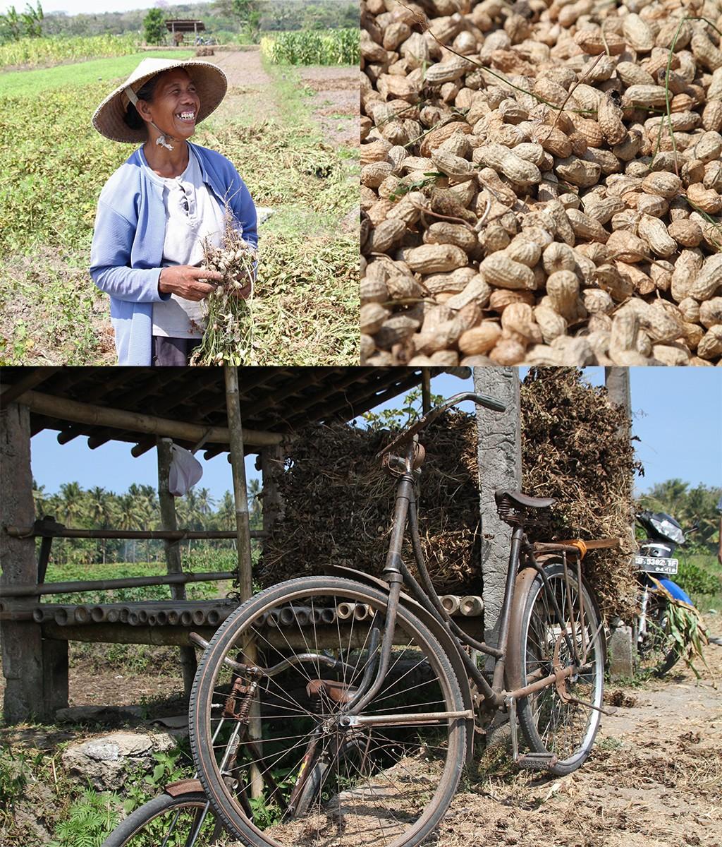 photo stories - pindaboeren Yogyakarta