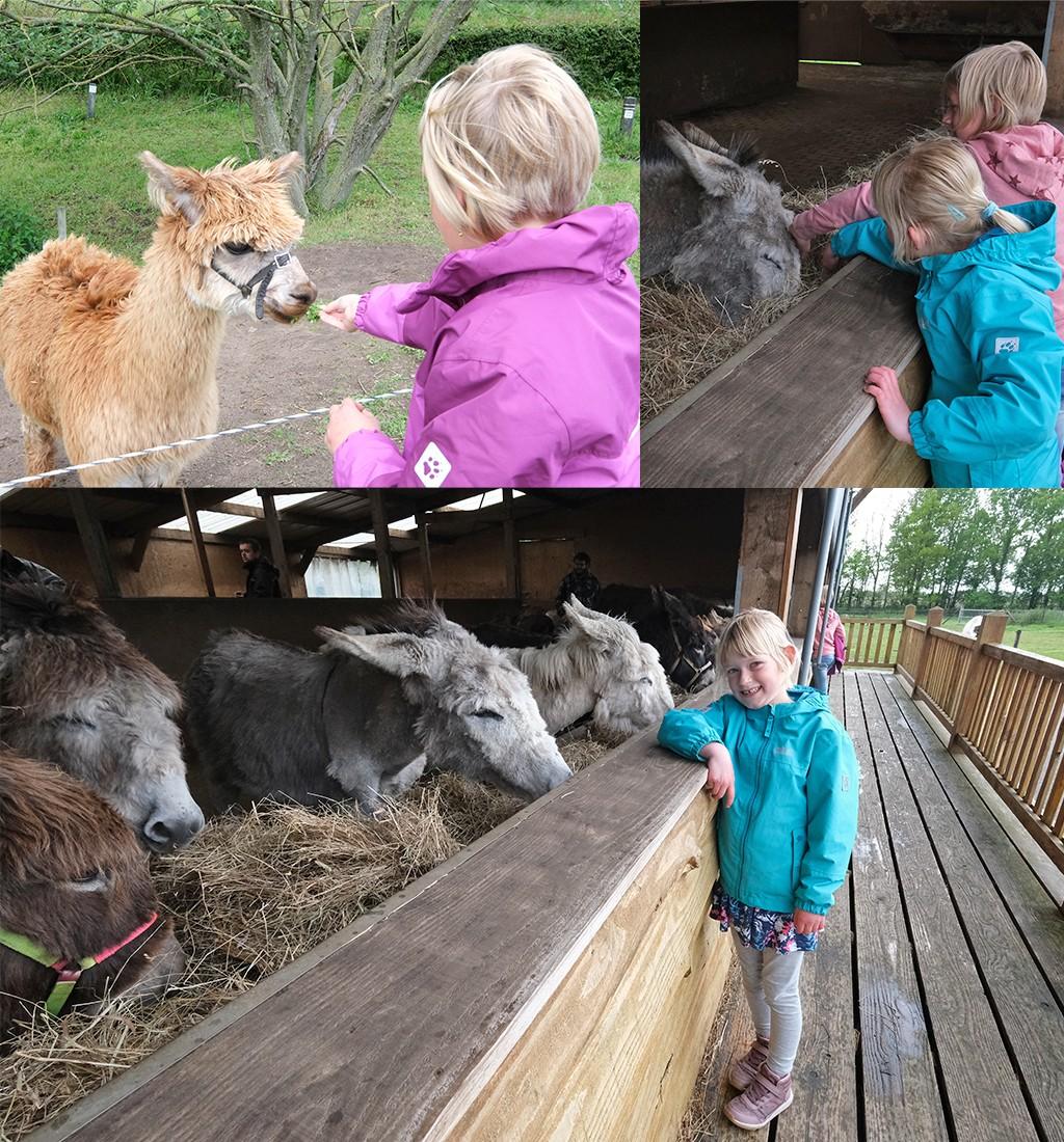 super lieve dieren bij de ezelstal in Zelhem