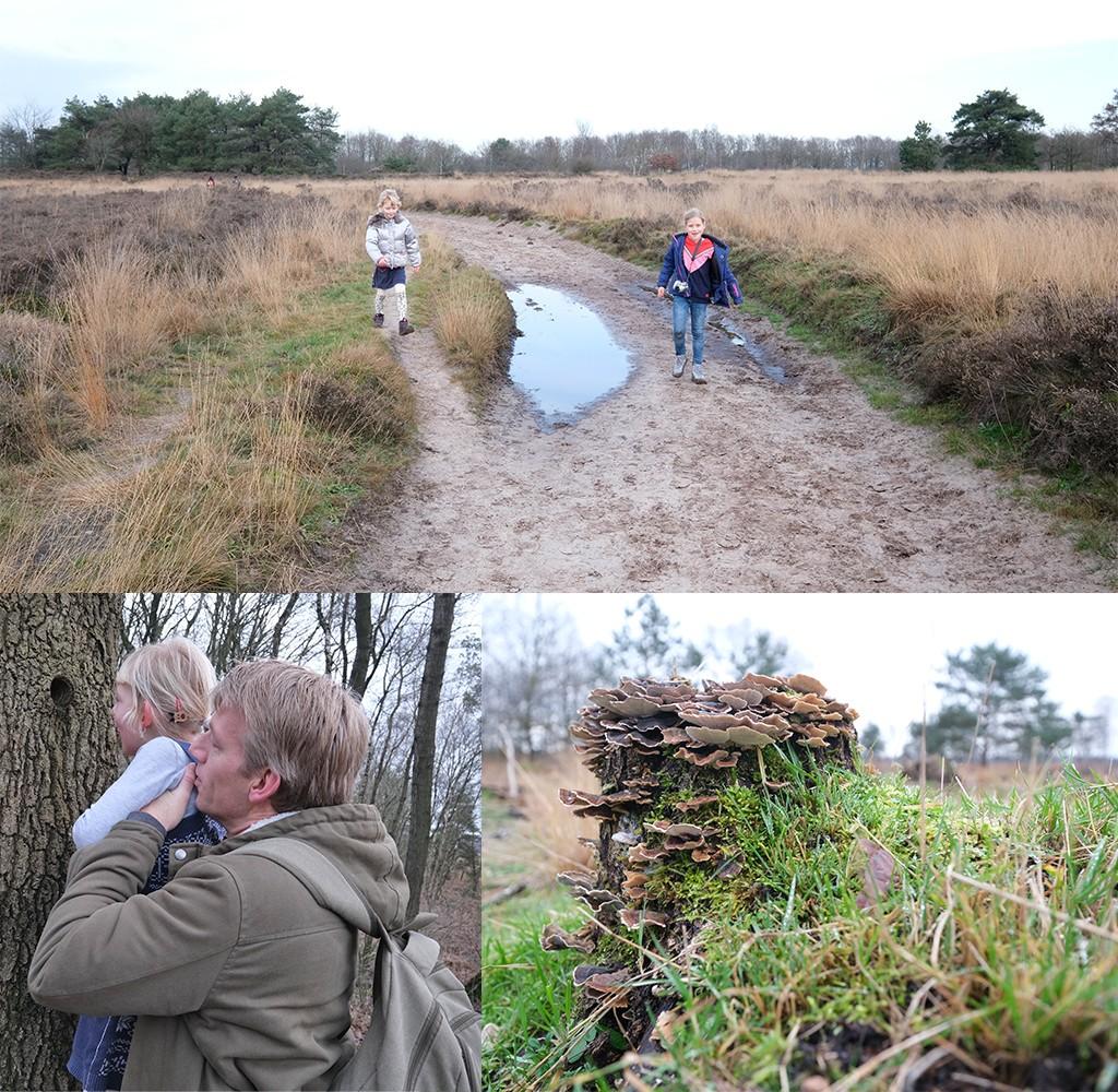 terugweg mooiste wandeling van Drenthe