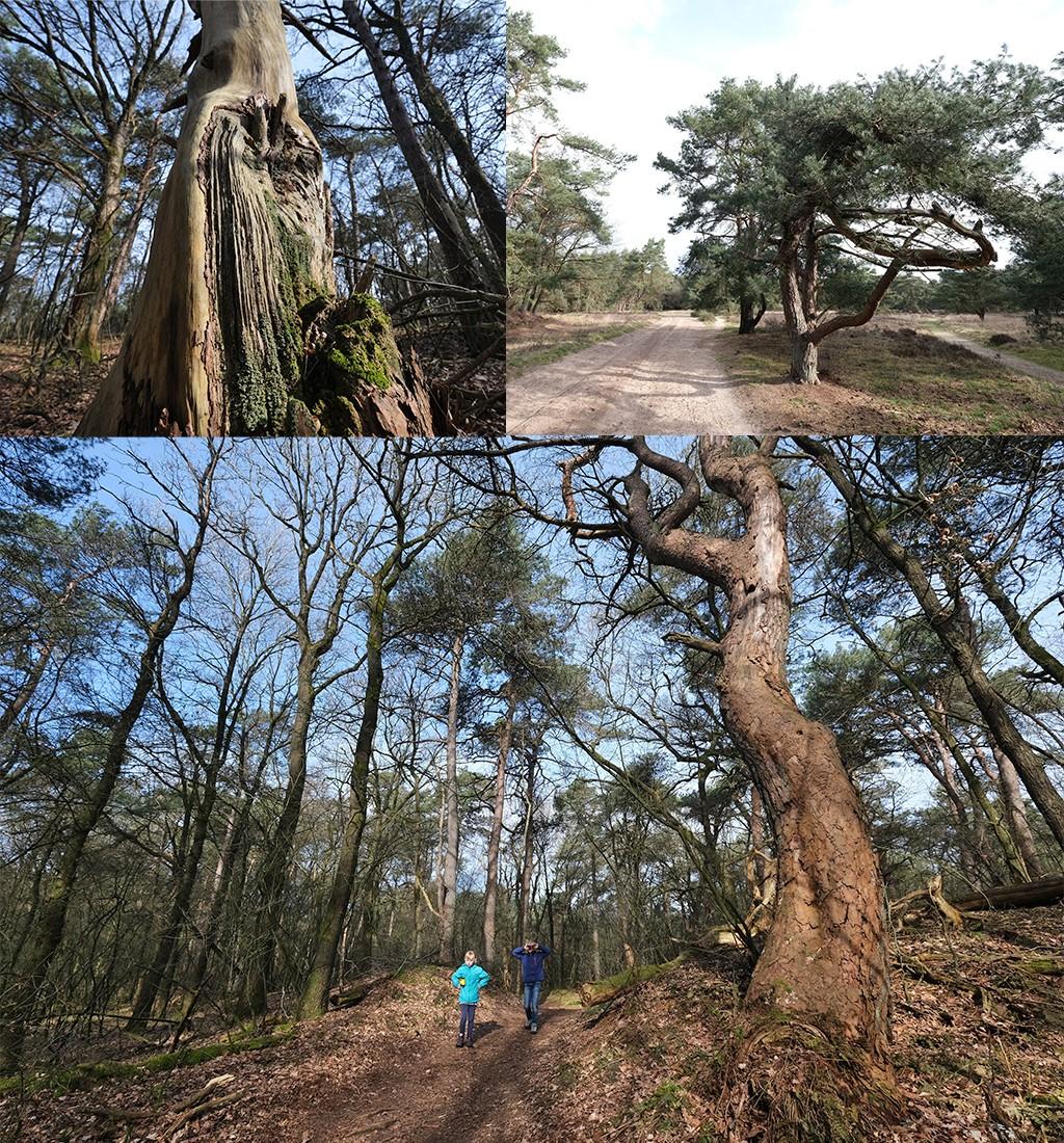 wandelen Dwingelderveld bos omgeving Ruinen