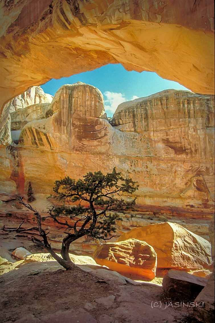Why Utah Is the Best State for Nature Lovers. Hickman Bridge and a tree.