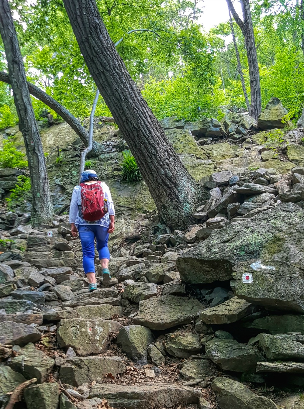 Lady climbing Mount Tammany Trail.